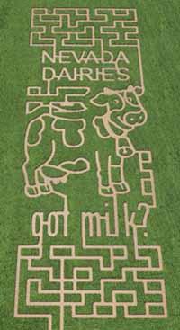 Lattin Farms Maze