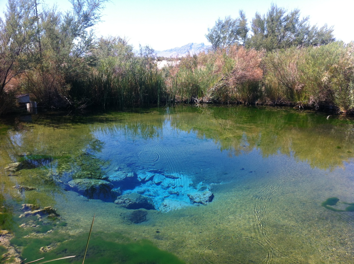 Ash Meadows National Wildlife Refuge