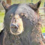 Ben at Safe Haven Wild Animal Refuge Nevada