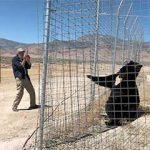 photo tourist shoots Teddy at Safe Haven Wild Animal Refuge Nevada