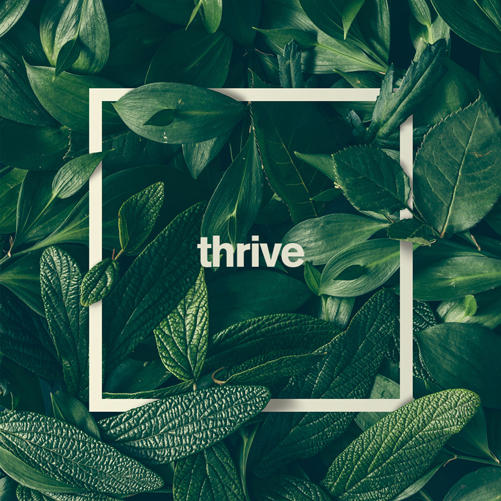 Thrive Cannabis Marketplace – Las Vegas