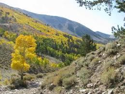 Success Summit Loop Road, Schell Creek Mountains, Nevada